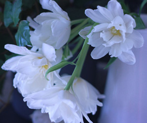 contact|横浜元町のフラワースクール花教室